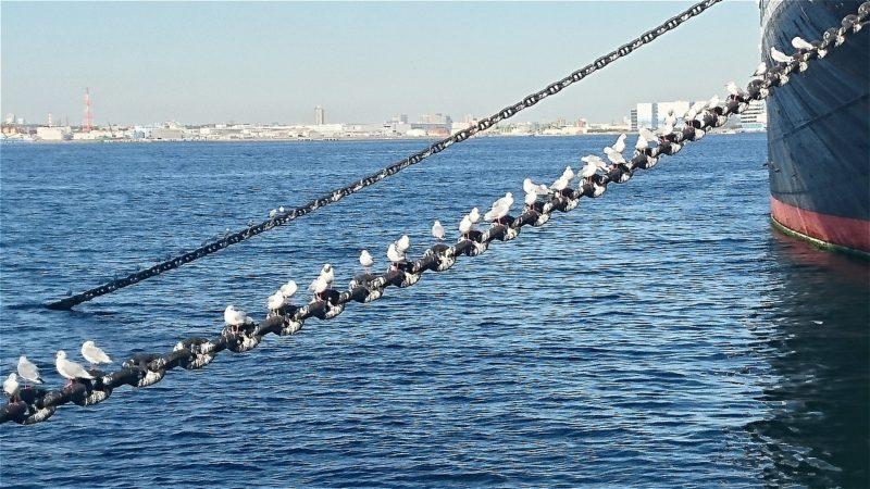 seagull-02